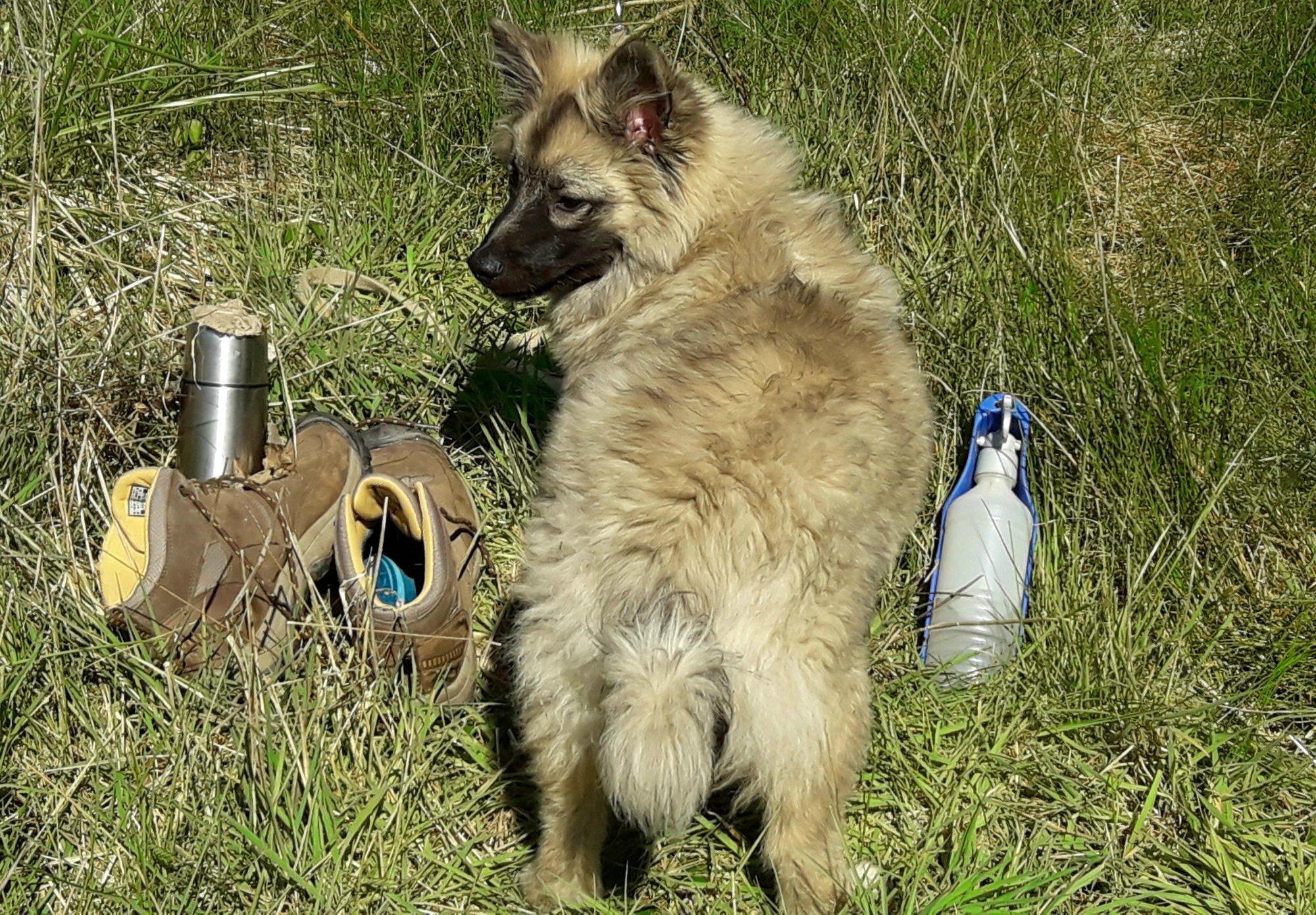 Geführte Hundewanderungen, Spaziergänge mit Hunden, Social-Walks...
